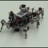 Robot roach extracts order from chaos